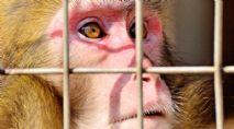 Tierversuche mit Affen an Z�rcher Uni?
